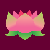 pink lotus flower waterlily